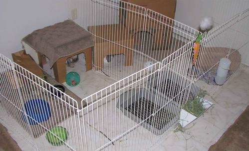 Bunspace Com Forum Flooring Ideas For Bunny Pen