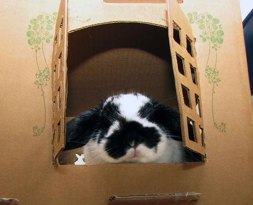 Bunny Castle Cardboard Create a Cardboard Castle For